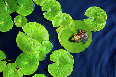 Ribbit Art Print by Greg Fortier