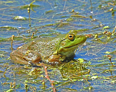 Photograph - Ribbit by Kathy M Krause
