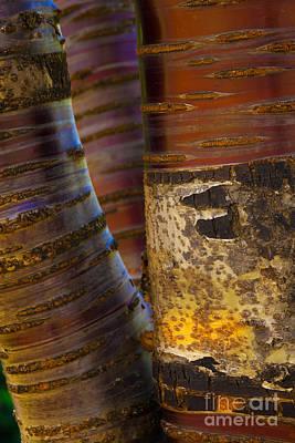 Photograph - Ribbons by Jennifer Apffel