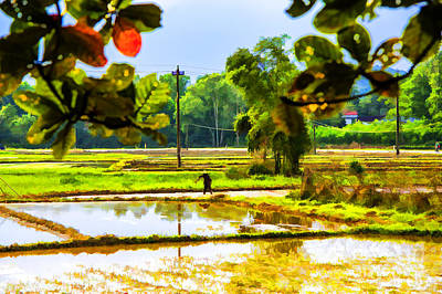 Photograph - Rice Field Reflections by Rick Bragan
