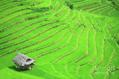 Rice Field Terraces Art Print by MotHaiBaPhoto Prints