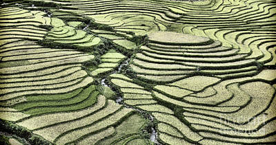 Photograph - Rice Fields Curves Landscape Vietnam  by Chuck Kuhn