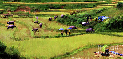 Photograph - Rice Fields Of Sapa Vietnam  by Chuck Kuhn