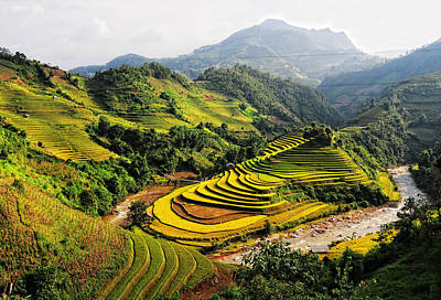 Rice Fields On Terraced In Vietnam Original by Phuong Duy Nguyen