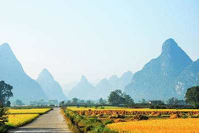 Photograph - Rice Fields Scenery In Autumn by Carl Ning