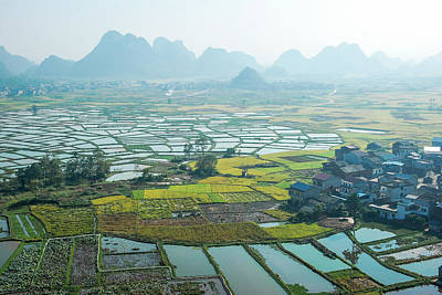 Photograph - Rice Fields Sceneryc by Carl Ning