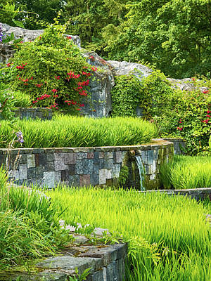 Painterly Photograph - Rice Garden by Wim Lanclus