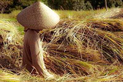 Photograph - Rice Harvest by Nila Newsom