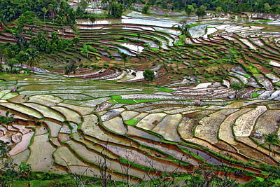 Photograph - Rice Paddy Field by Anthony Dezenzio