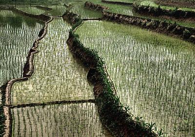 Photograph - Rice Paddy by Joe Bonita