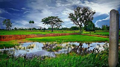 Photograph - Rice Paddy View by Ian Gledhill