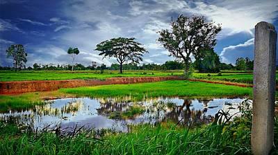 Rice Paddy View Art Print