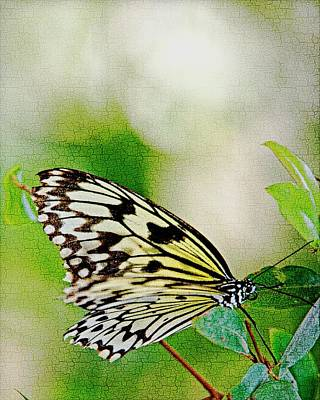 Digital Art - Rice Paper Butterfly With Crackle Texture by Walter Herrit