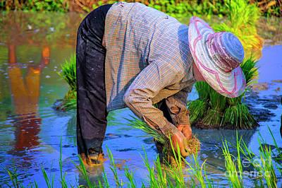 Photograph - Rice Planter by Rick Bragan