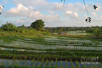 Target Project 62 Abstract - Rice Terrace at Pacuna #1 Vibrant by AEC - Abundant Eight Creative