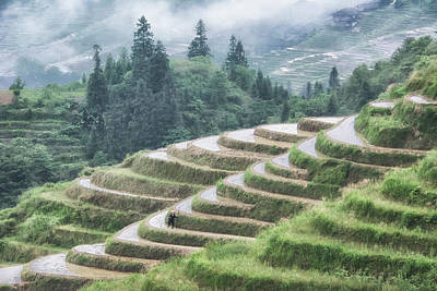 Photograph - Rice Terraces by Wade Aiken
