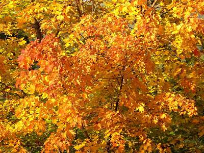 Photograph - Rich Autumn Color by Will Borden