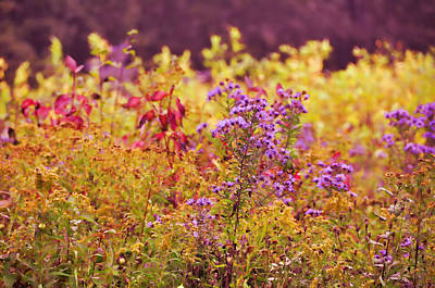 Photograph - Rich Colors Of Autumn by JAMART Photography