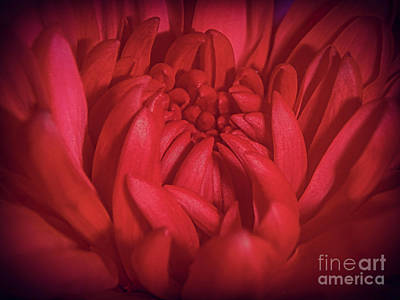 Photograph - Richly Red by Judy Hall-Folde