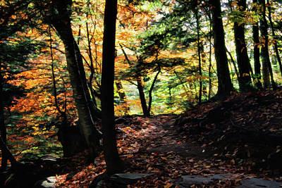 Photograph - Ricketts Glen Trail 004 by Scott McAllister