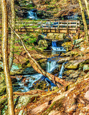 Photograph - Ricketts Glen Waterfall Trail by Nick Zelinsky