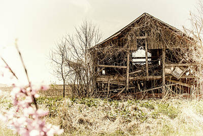 Photograph - Rickety Shack by Pamela Williams