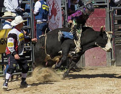 Photograph - Ridem Cowboy by Steven Parker