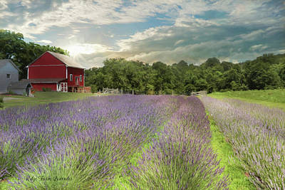 Photograph - Ridge Farm Lavender by Lori Deiter