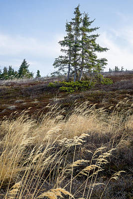 Photograph - Ridge In Early Spring by Tim Newton