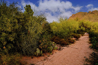 Photograph - Ridge Trail No1 by Mark Myhaver