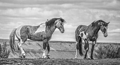 Forelock Photograph - Ridgeline Stallions D3918 by Wes and Dotty Weber