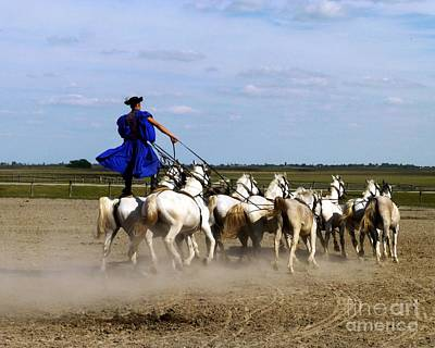 Photograph - Riding 10 Horses by Barbie Corbett-Newmin