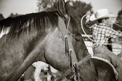Photograph - Riding And Roping by Steven Bateson