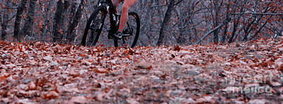 Cyclists Photograph - Riding Autumn  by Steven Digman