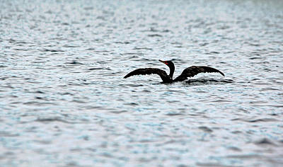 Photograph - Riding Low by Debbie Oppermann