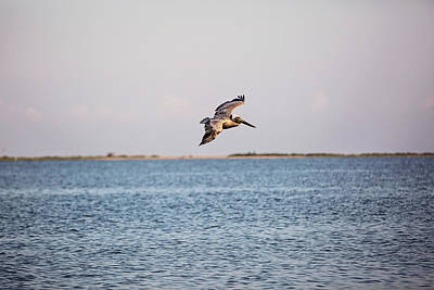 Photograph - Riding The Breeze Over The Gulf Waters by Scott Pellegrin