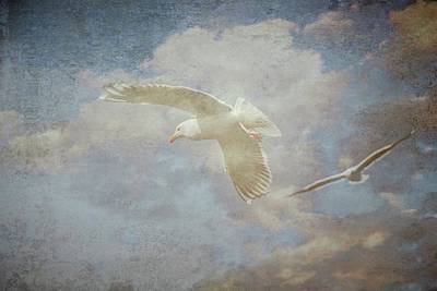 Photograph - Riding The Wind, Seagulls by Flying Z Photography by Zayne Diamond