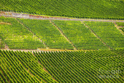 Photograph - Riesling Grapes by Patricia Hofmeester