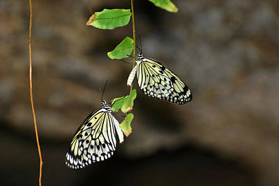 Art Print featuring the photograph Right And Left Wings by Teresa Blanton