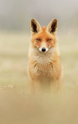 Right Into Your Soul - Red Fox Art Print by Roeselien Raimond