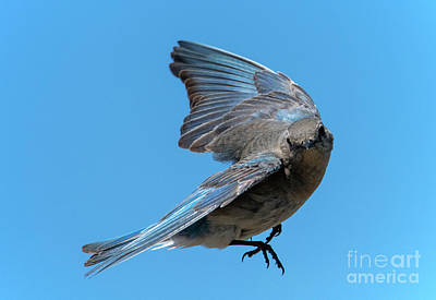 Mountain Royalty-Free and Rights-Managed Images - Right Turn by Mike Dawson
