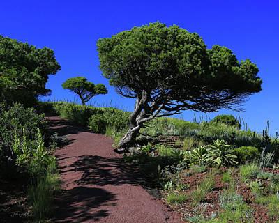 Photograph - Rim Trail 1 by Jim Arnold