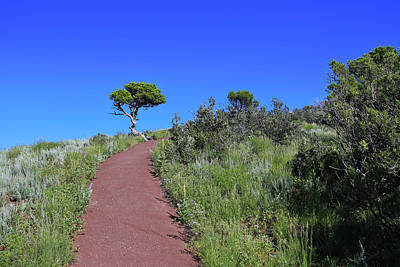 Photograph - Rim Trail 2 by Jim Arnold