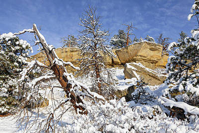 Photograph - Rimrock Winter by Jack Bell