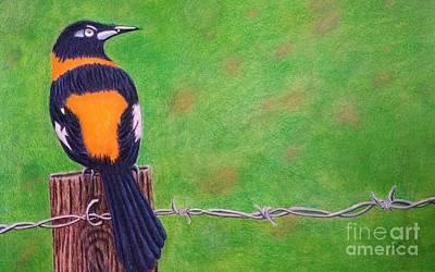 Rincon Bird Original