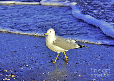 Photograph - Ring-billed Gull No.2 by Lydia Holly