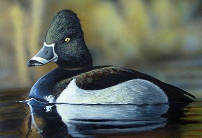 Ring Necked Duck Painting - Ring-necked Duck by Anthony J Padgett