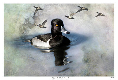 John Williams Digital Art - Ring-necked Duck Comrades by John Williams