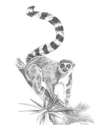 Drawing - Ring-tailed Lemur by Pencil Paws