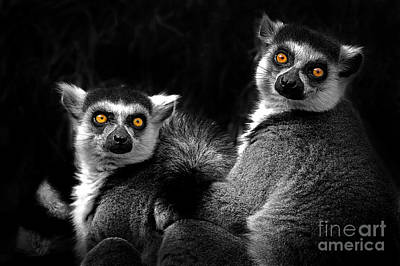Photograph - Ring-tailed Lemur by Sonya Lang